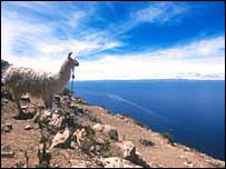 Llama gazes out at Lake Titicaca