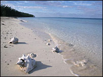 Bahamas beach and conch shell