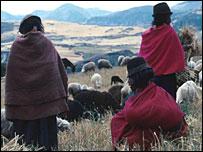 Farmers and their animals, Ecuador