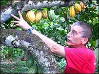 Claudio Corallo examining cocoa pods