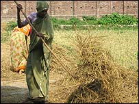 Woman gathering hay in Phulbari - Bangladesh
