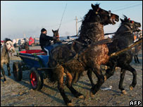 Romanian horse seller drives cart