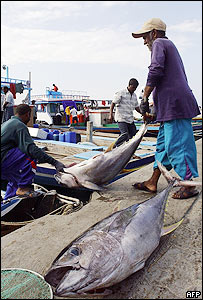 Maldives fishing port