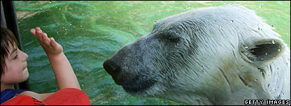 Polar bear at Nuremberg