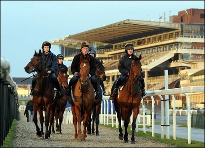 Dessie Hughes's horses on the gallops at Cheltenham