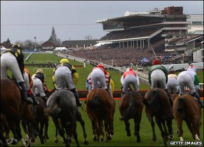 Horses at the start at Cheltenham