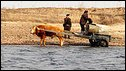 North Korean farmers colelcting water from the Yalu River