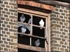 Sash window in derelict house