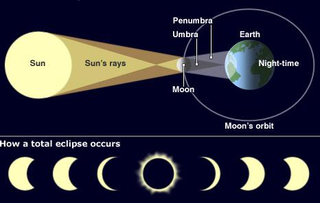 Infographic (BBC)