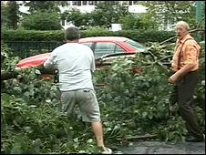 Fallen tree in Poland, 23 Jul 09 (still from Polish TV)