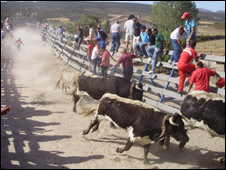 Bull running in Manzanares el Real
