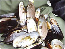 Freshwater pearl mussels (Pic: Dr Peter Cosgrove)