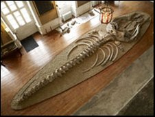 The whale skeleton on display at Burton Constable