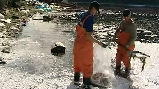 Workers clean up the aftermath of the oil spill on the Yenisey river
