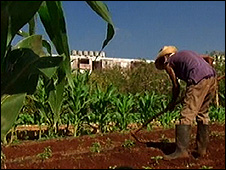 vegetable plot in Havana