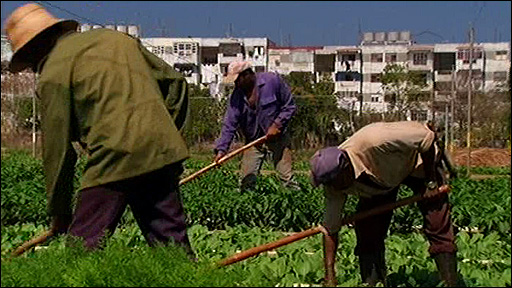 Farm labourers in Havana