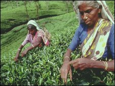 Tea picker in Sri Lanka (file)