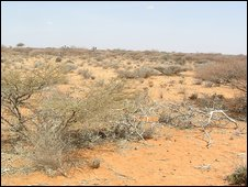 Drought hit lands in central Somalia