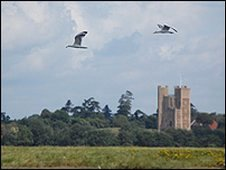 Orford Castle from Havergate Island