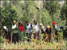 Women working in field in Rwanda