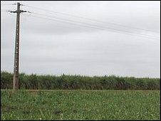 Mozambican cane farm