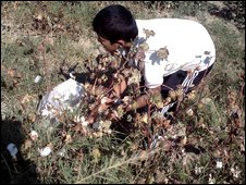 boy picking cotton in Uzbekistan
