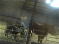 Rand Farm webcam