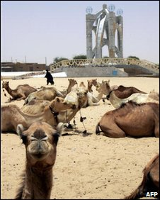 Dromedaries in Timbuktu, file image