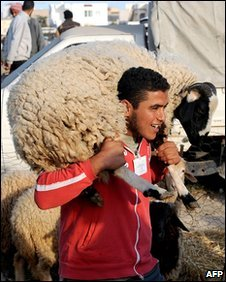 Man carrying sheep in Tunisian market