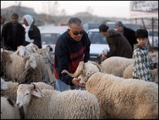 Sheep market in Tunisia