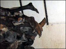 Some of the dead bodies in the morgue