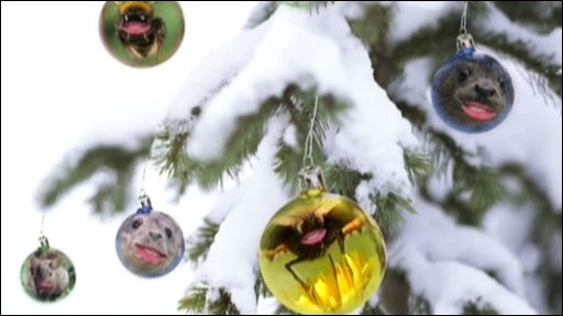 Animal images in baubles on a tree