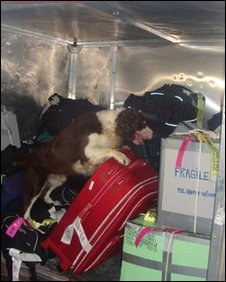 A sniffer dog searches for drugs in luggage at Sao PAulo internatinal airport