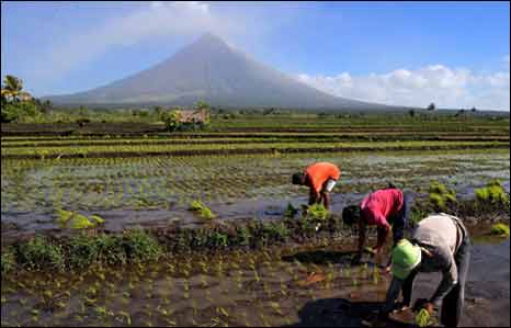 Mt Mayon, people planting rice, 24 Dec 09 