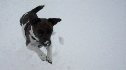 A dog jumps in the snow