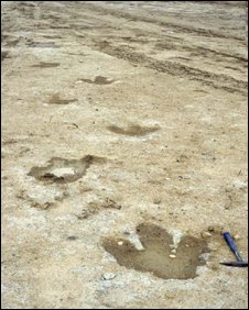 The dinosaur tracks at Ardley Trackways near Bicester