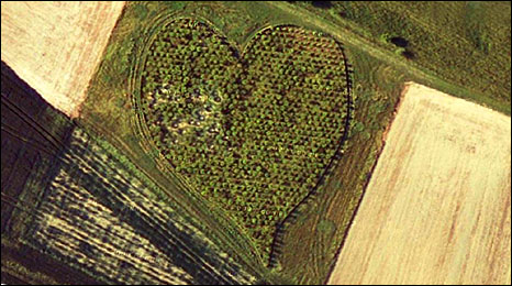 Heart Wood, Oare, Wiltshire