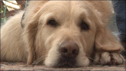 Ajay, the seizure alert dog