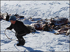 A child collects carcasses in Mongolia (Feb 2010)