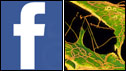 Facebook and syphilis