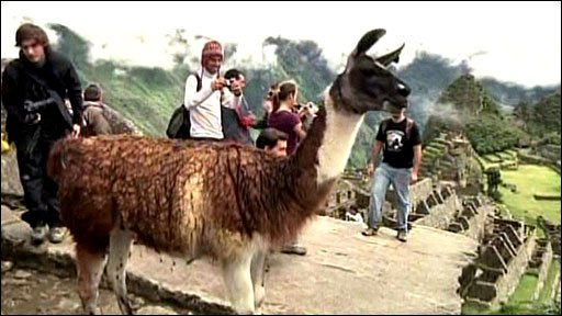 Llama and tourists on Machu Picchu