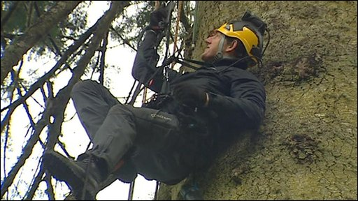 Expert climber Chris Betts scales Britain's tallest tree