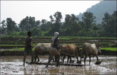 Jharkand villagers tilling the land with oxen