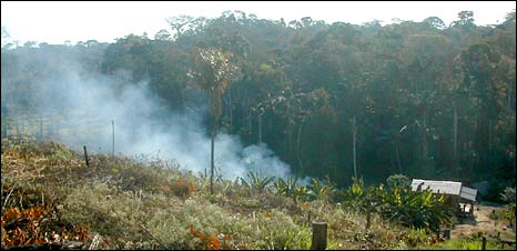Forest burning in Brazil