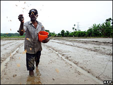 Farmer sowing rice