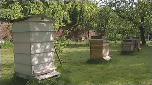 BBC London's bee hive at Morden Hall Park in south west London
