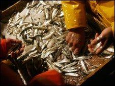 Fish (AFP)