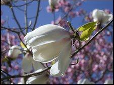 _47925462_flower.jpg