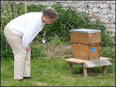 Elaine Gibbs examining a bee hive at Felbrigg Hall