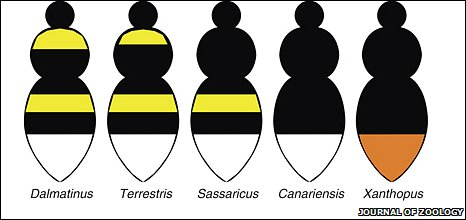 Different populations of bees